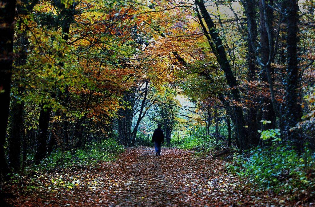 A walker in Belleek Woods